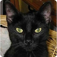 Adopt A Pet :: KITTENRomeo - Plainville, MA
