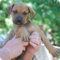Adopt A Pet :: Scotty - Providence, RI
