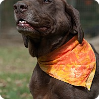 Adopt A Pet :: Bosco - Lewisville, IN