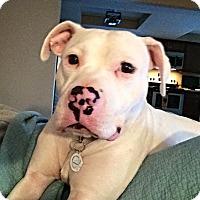 Adopt A Pet :: Leo - Dayton, OH
