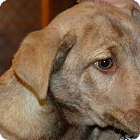 Adopt A Pet :: Tony - Mount Laurel, NJ