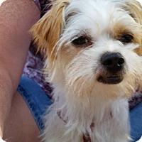 Adopt A Pet :: Abby - ROME, NY