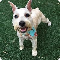 Adopt A Pet :: Charlotte - Redondo Beach, CA