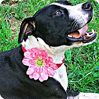 Adopt A Pet :: Tinkerbell - Charlotte, NC