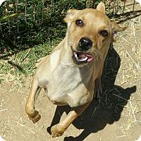 Adopt A Pet :: Caden - Sacramento, CA