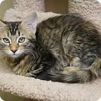 Adopt A Pet :: Misty - Tempe, AZ
