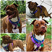 Adopt A Pet :: Max - Forked River, NJ