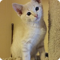 Adopt A Pet :: Malakai (Kai) - Chattanooga, TN