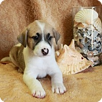 Adopt A Pet :: East Matunik - Spring Valley, NY