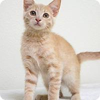 Adopt A Pet :: Andrea - Dublin, CA