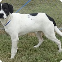 Adopt A Pet :: Smiley - Olive Branch, MS