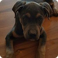 Adopt A Pet :: Dory - Franklin, VA