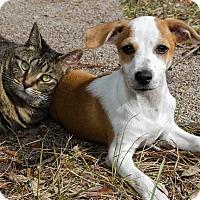 Adopt A Pet :: Frankie - Weeki Wachee, FL