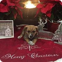 Adopt A Pet :: Kalua - Stamford, CT
