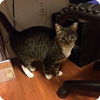 Adopt A Pet :: Pat - Brooklyn, NY