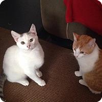 Adopt A Pet :: Harry & Sunny - Jacksonville, FL