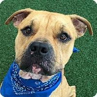 Adopt A Pet :: Ruben - Denver, CO