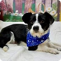 Adopt A Pet :: ROMEO - Fort Pierce, FL