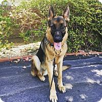 Adopt A Pet :: Lincoln - Los Angeles, CA