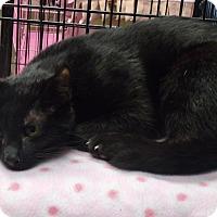 Adopt A Pet :: Shaka - Somerset, KY