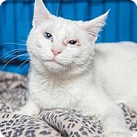 Adopt A Pet :: Iris - Gaithersburg, MD