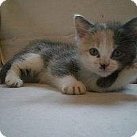 Adopt A Pet :: Butterball - Byron Center, MI