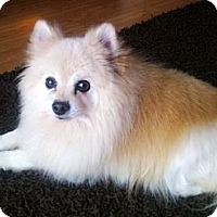 Adopt A Pet :: Prince - Toronto, ON