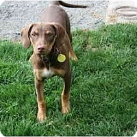 Adopt A Pet :: Mango - Pending - Vancouver, BC