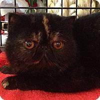 Adopt A Pet :: Jett - Beverly Hills, CA