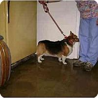 Adopt A Pet :: Sugar - Inola, OK