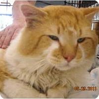 Adopt A Pet :: Sunny - Riverside, RI