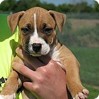 Adopt A Pet :: Kermit - Reisterstown, MD