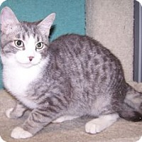 Adopt A Pet :: K-Eva4-Flynn - Colorado Springs, CO