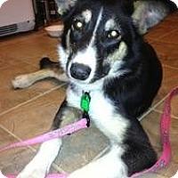 Adopt A Pet :: Ayva - Saskatoon, SK