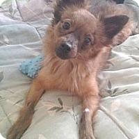 Adopt A Pet :: Cypress - Orlando, FL