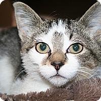 Adopt A Pet :: Tickles - Edmonton, AB