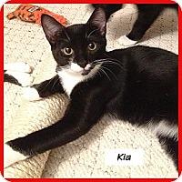 Adopt A Pet :: Kia - Miami, FL
