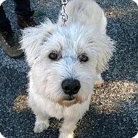 Adopt A Pet :: George - Richardson, TX