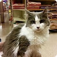 Adopt A Pet :: Lilly - Colmar, PA