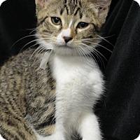 Adopt A Pet :: Husky151422 - Atlanta, GA