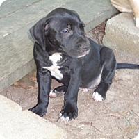 Adopt A Pet :: Dusty - Warrenton, NC