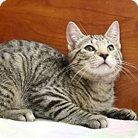Adopt A Pet :: Joey - Greensboro, GA