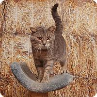 Adopt A Pet :: Frankie - Chippewa Falls, WI