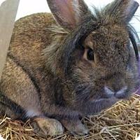 Adopt A Pet :: Tommi Tomato - Woburn, MA