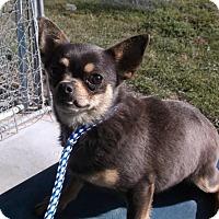 Adopt A Pet :: Gretchen - Bonifay, FL