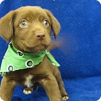 Adopt A Pet :: Reno - Groton, MA