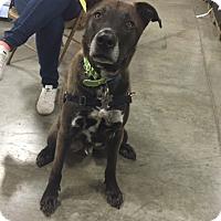 Adopt A Pet :: Dexter - Bellingham, WA