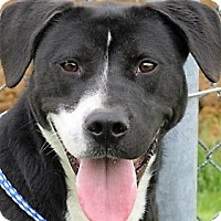 Adopt A Pet :: Allister - Germantown, MD