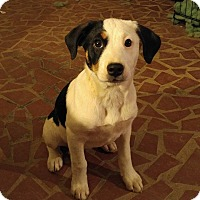 Adopt A Pet :: Suki - Alpharetta, GA