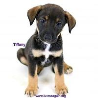 Adopt A Pet :: Tiffany - Bloomington, MN